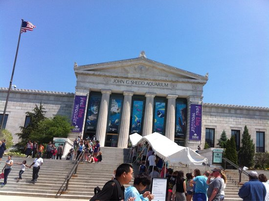 Shedd Aquarium: Line at main entrance on a Monday.  Was told this wasn't a busy day.
