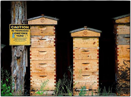Buttermilk Falls Inn & Spa: Bee aviary