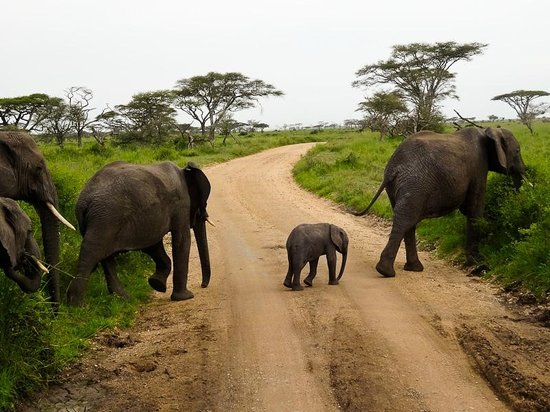Safari Infinity - Day Tours: Mom and Baby