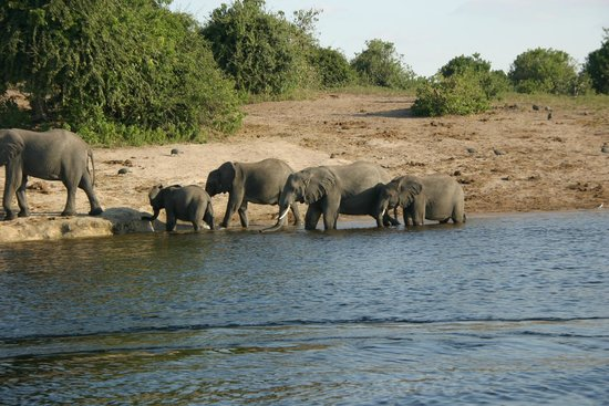 Chobe Game Lodge : We had lunch with these elephants on our second day