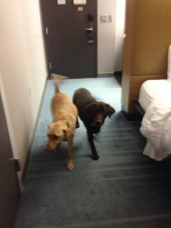 aloft Winchester: dogs