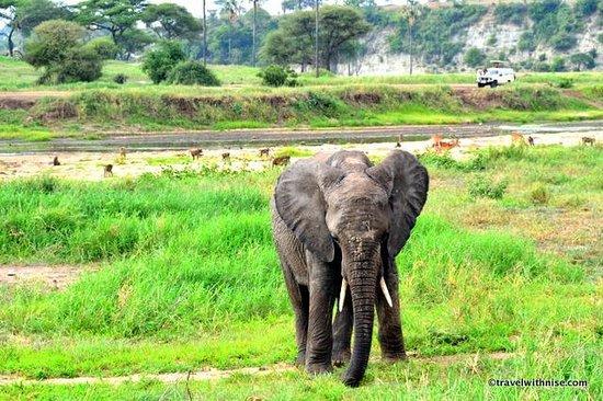 Tarangire Safari Lodge: Elephant, Baboons & Impala at River Tarangire National Park