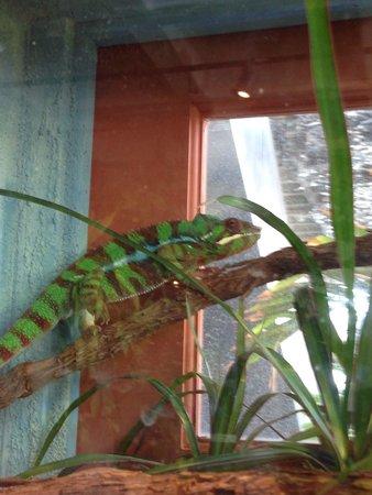 South Carolina Aquarium : Chameleon
