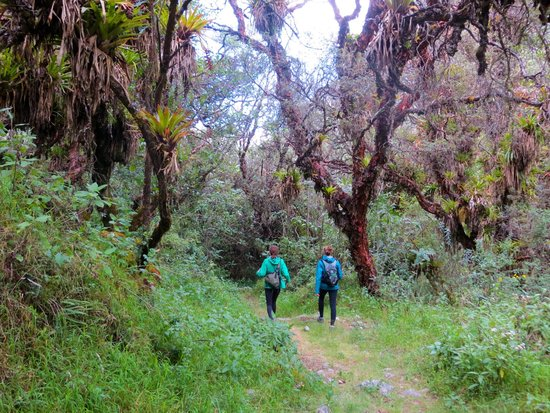Llanganuco Mountain Lodge: The cloud forest, which you can visit on a day hike from the lodge.
