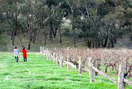 Moonambel Australia  city photos : Warrenmang Vineyard & Resort: The walk around the non vineyard part of ...