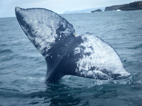 Whale's Tail Charters