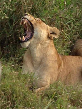 Tintswalo Safari Lodge : Hello and Welcome