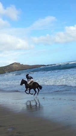 Atlantic Shores Riding Stables: afternoon gallop on Perfect Storm. Horseback Riding St.Lucia