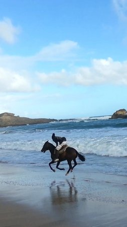 Atlantic Shores Riding Stables: horseback riding St.Lucia