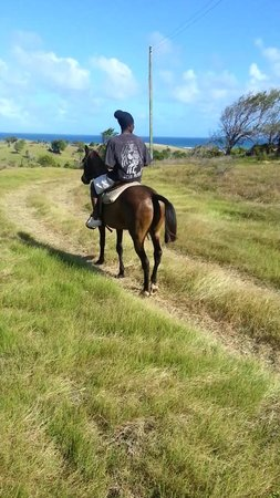 Atlantic Shores Riding Stables: horseback riding St. Lucia