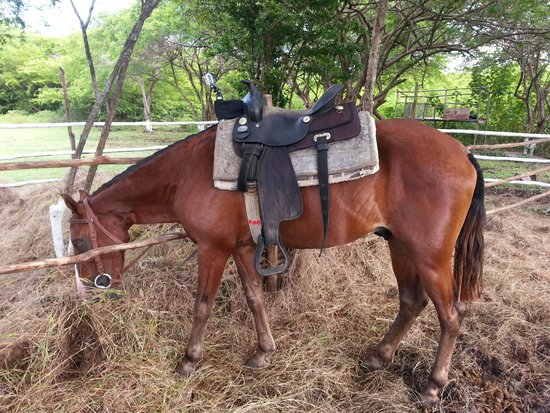 Atlantic Shores Riding Stables: fitted with his GoPro for Bachelor Juan Pablo