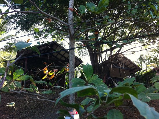 Funky Monkey Lodge: bungalows