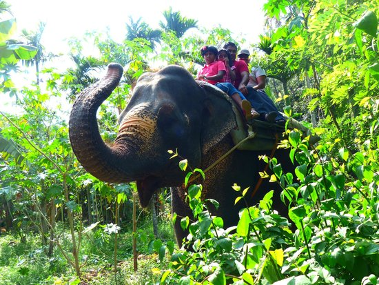 Elephant Junction - Day Tours: elephant ride