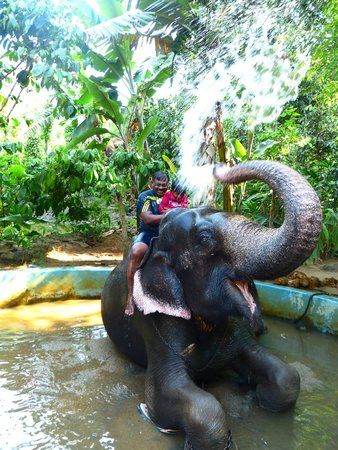 Elephant Junction - Day Tours: elephatant shower