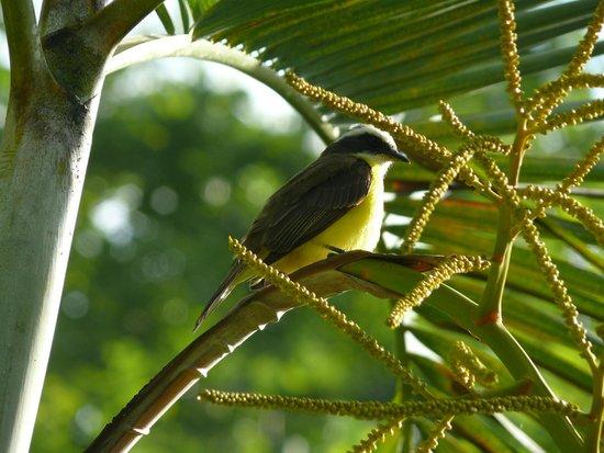 The Lodge at Chaa Creek : Bird at Chaa Creek during the early morning bird walk