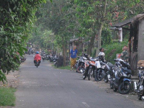 Petulu White Herons: Petulu village road