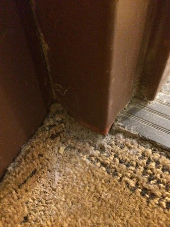 Four Points by Sheraton Midtown - Times Square: dirty carpet