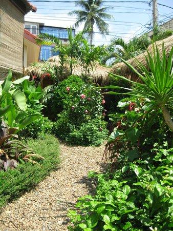The Villa Paradiso : Garden