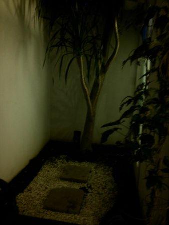 Kamar Kamar Rumah Tamu: Mini backyard