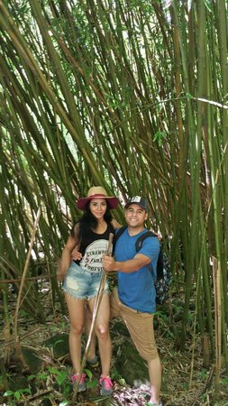 Maui Hiking Safaris Hiking Tours : Surrounded by Bamboo