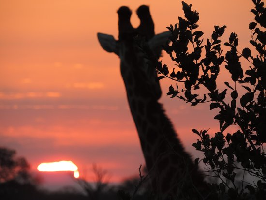 Savanna Private Game Reserve : As the sun sets.