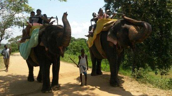 Cinnamon Lodge Habarana: elephant ride