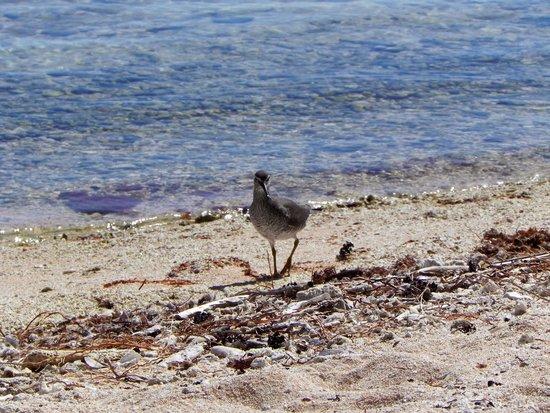 Pension Poerani Nui: des poissons et aussi des oiseaux
