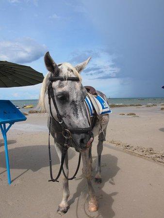 Hua Hin Beach : 我騎這匹