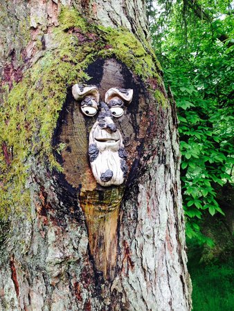 A face in The Wild Boar Wood!