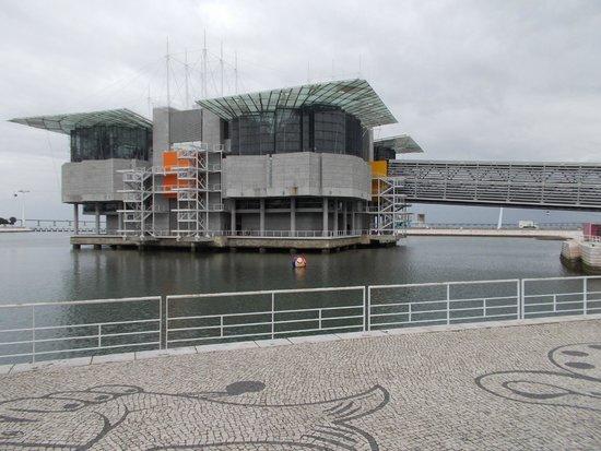 Lisbon Oceanarium : Oceanario