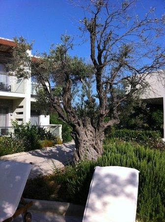 Sentido Port Royal Villas & Spa: Lovely