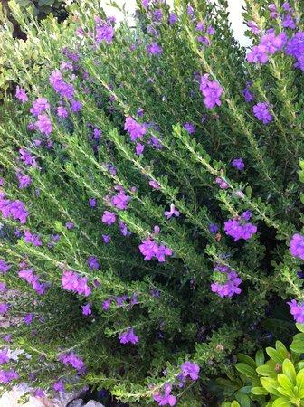 Sentido Port Royal Villas & Spa: Lovely flowers