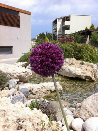 SENTIDO Port Royal Villas & Spa: lovely flowers