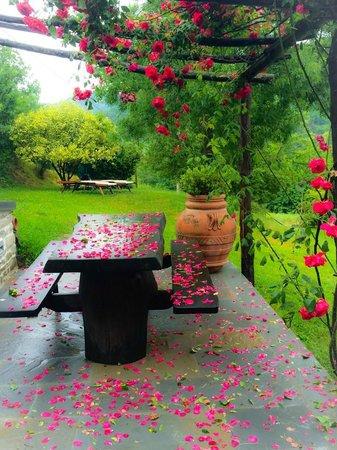 B&B Ca Maranghi: Garden