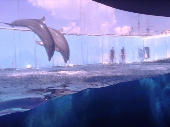 Acquario di Genova : delfini
