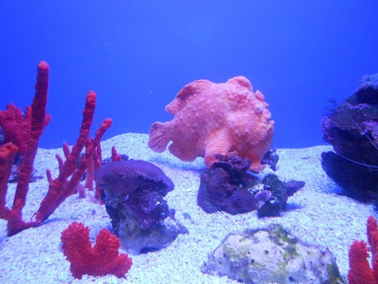 Maui Ocean Center: Interesting pink fish