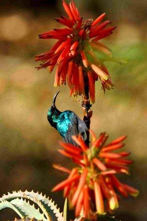 Shayamoya Tiger Fishing & Game Lodge: Active birdlife due to the indigenous gardens