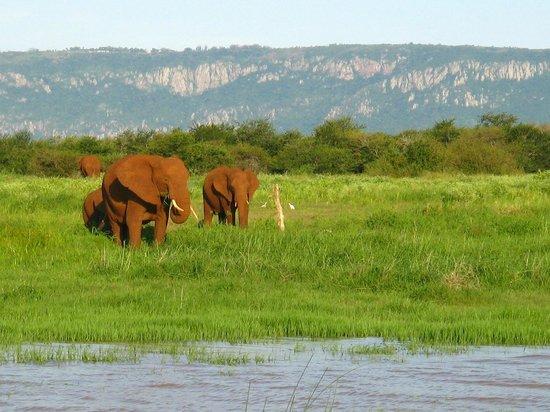 Shayamoya Tiger Fishing & Game Lodge: On a boat cruise, view elephants