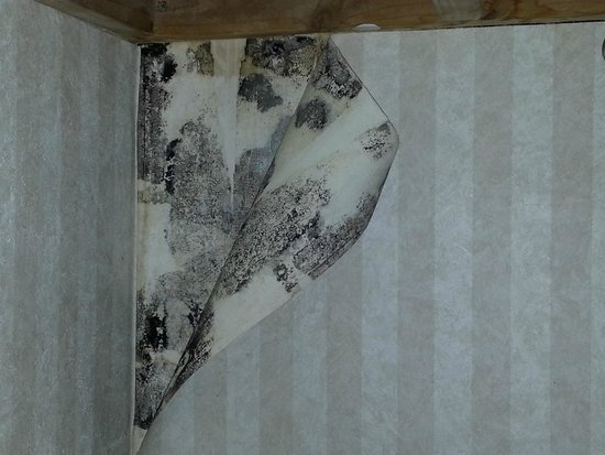 Embassy Suites by Hilton Arcadia Pasadena Area: Wall paper peeling with mold on the wall