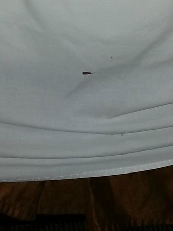 Embassy Suites by Hilton Arcadia Pasadena Area: Hole in sheet on bed