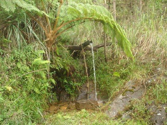 Hill Safari Eco Lodge Ohiya: Bathing spout