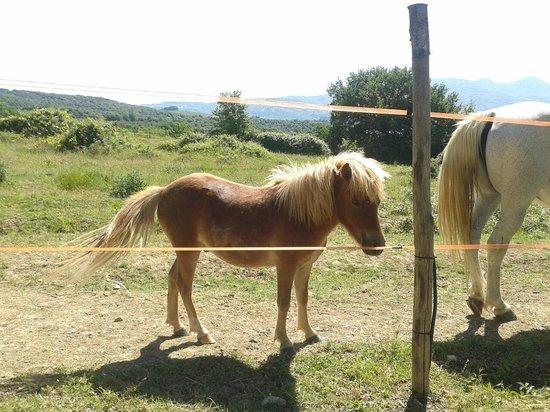 Agriturismo Tenuta di Corbara: Cavallino della Tenuta di Corbara