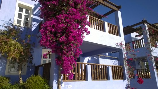 Candia Park Village : вот такие домики
