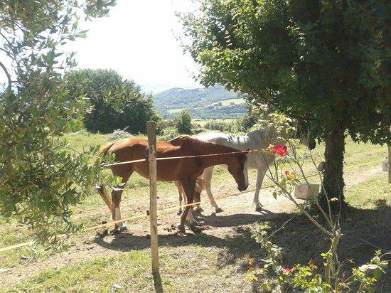 Agriturismo Tenuta di Corbara: Cavalli della Tenuta di Corbara