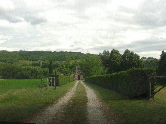Agriturismo Tenuta di Corbara: Viale del Ponticello