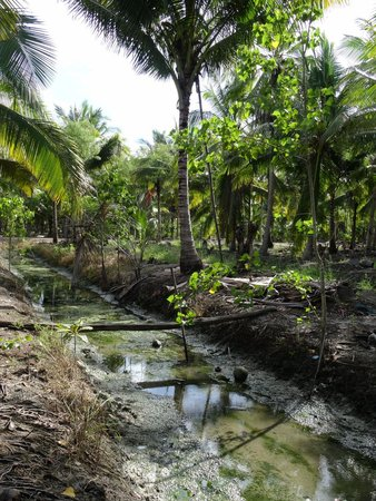 BKK Tours: Coconut farm near Tha Kha market
