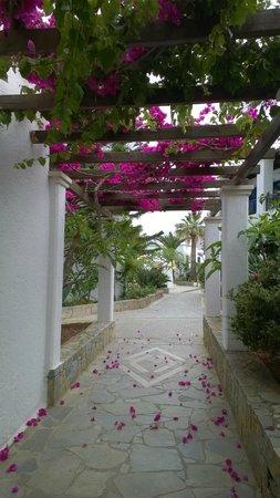 Nana Beach Hotel: просто тропинка
