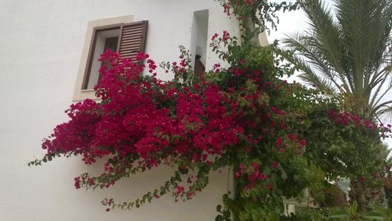 Nana Beach Hotel: цветы