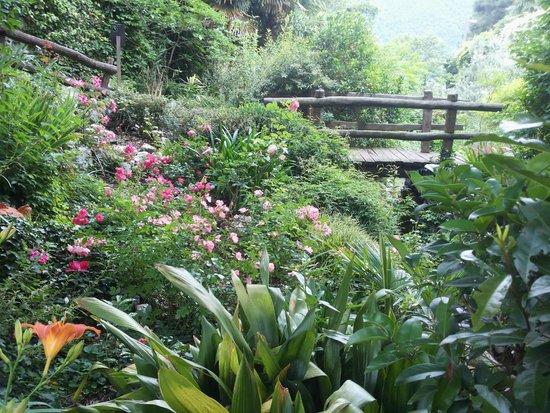 Cernobbio, Italy: Il giardino della valle nel mese di giugno