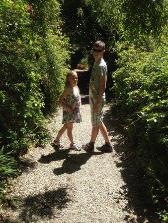 Trengwainton Garden: Enjoying exploring....